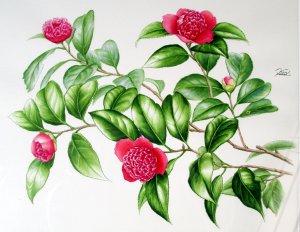 唐子咲き椿